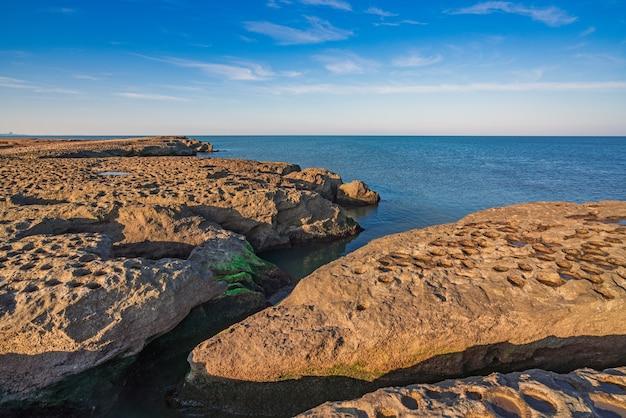 緑の海藻と岩の多い海岸