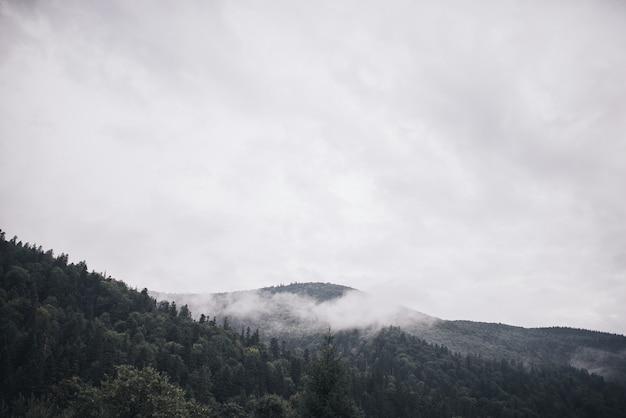 岩だらけの高山。木のてっぺんに積もった森の霧が山を風化させます。曇った山腹と常緑樹の景観。