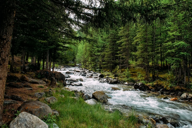 Rocky mountain river among the pine trees