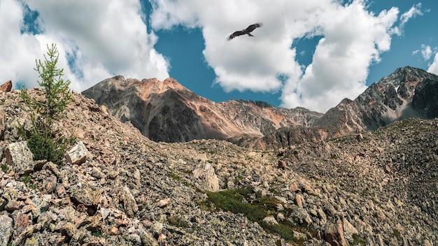 외로운 소나무와 바위 산 경사면입니다. 흐린 푸른 하늘 아래 바위가 많은 언덕과 많은 돌이 있는 대기의 미니멀한 산 풍경.