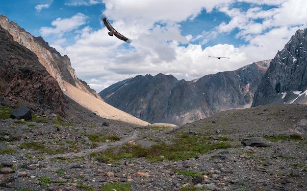 나는 새와 함께 바위 산 계곡입니다. 눈 덮인 산맥 사이의 고원 계곡과 푸른 하늘 아래 뾰족한 봉우리. 분위기 있는 산의 풍경입니다.