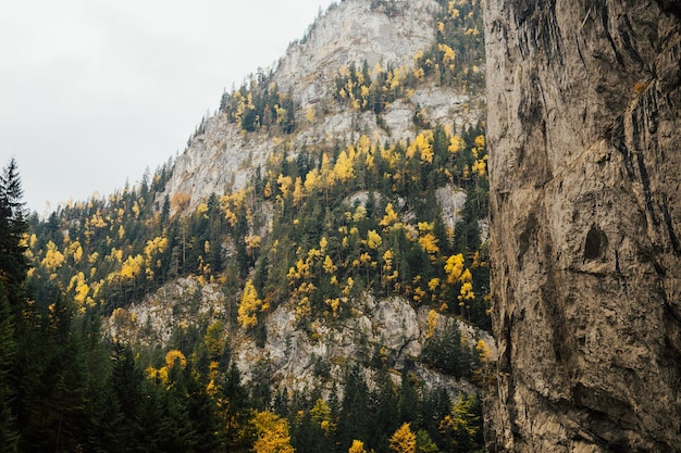 The rocky mountains in romania. majestic autumn scenery with colourful forest and picturesque mountains.