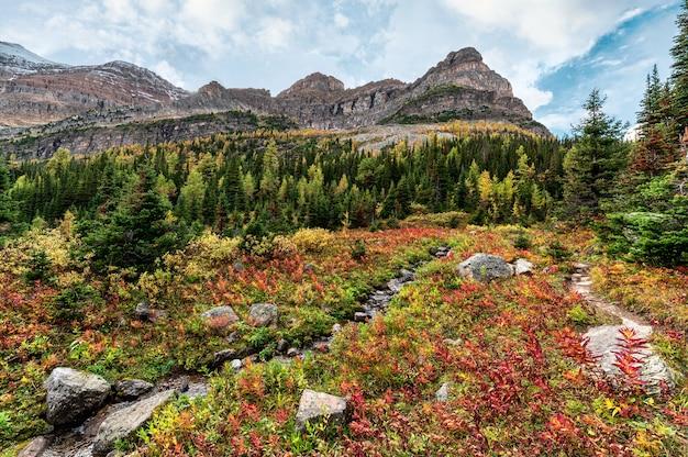 アシニボイン州立公園の秋の森の小川とロッキー山脈