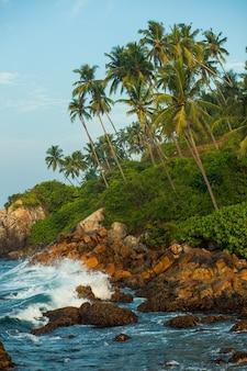 ヤシの木のある岩の多い海岸