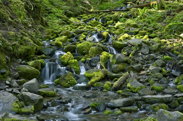 Rocky rainforest creek