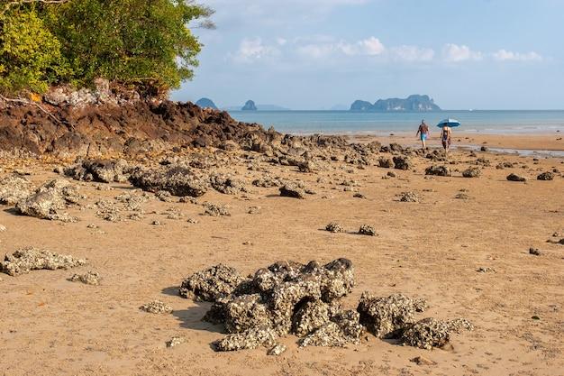 Скалистый берег и песок с покрытыми ракушками камнями во время отлива. девушка и мужчина гуляют по отмели. у девушки над головой зонт для защиты от солнца. по горизонтали.