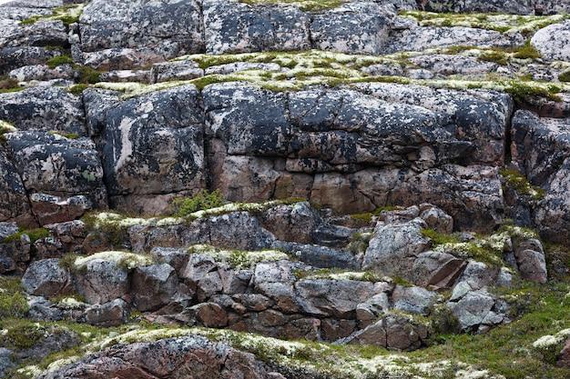岩だらけの石の海岸バレンツ海、苔や地衣類が生い茂っている