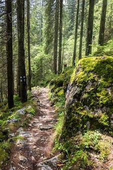 Rocky terrain in carpathian mountains