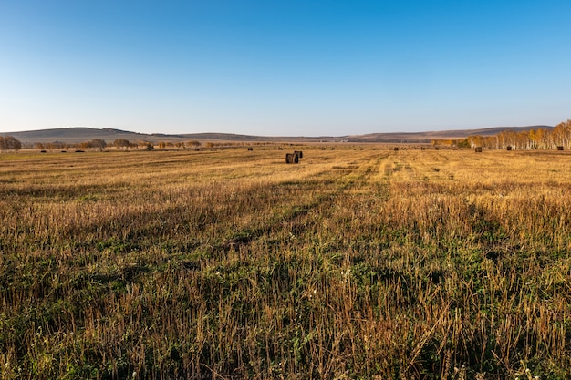 Roll of fresh hay in the autumn field, livestock feed