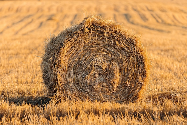 A roll of hay in a mown field in dusk or dawn light.