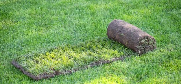 裏庭のスポーツ芝生のロール。造園またはゴルフコースの作成。クローズアップ、セレクティブフォーカス。