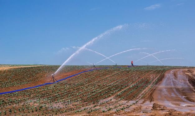 春の季節に農民の畑を灌漑する折りたたみ式自動スプリンクラー散水銃。農業におけるスプリンクラー灌漑システム