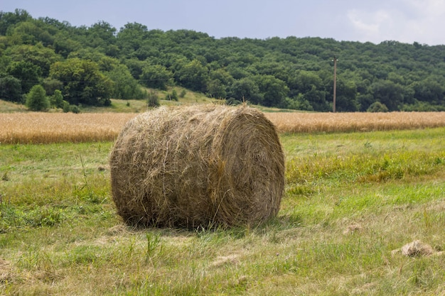Rolls of haystack on the field, after harvesting wheat.