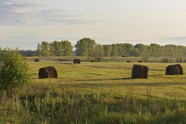 収穫された畑に干し草のロールが散らばっている朝の秋の木々や草