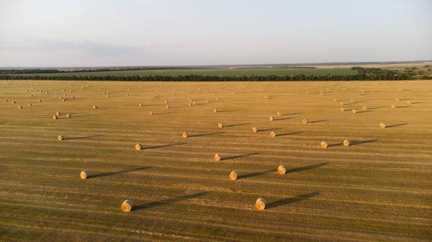 Рулоны соломы на сельскохозяйственном поле после сбора урожая пшеницы