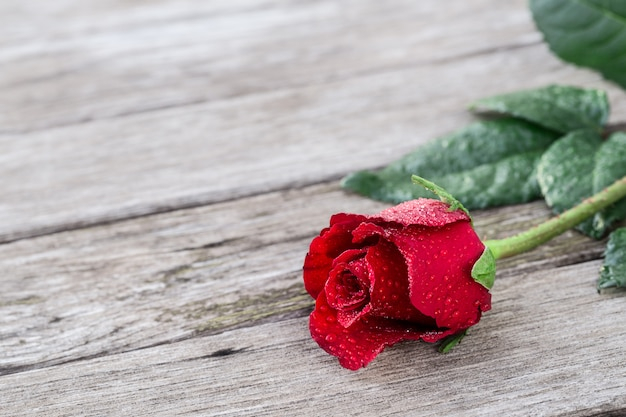 Romantic background with one blooming red rose on wooden rustic table with copyspace.