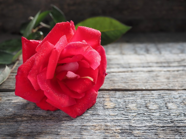 Romantic background with red rose on wood table.