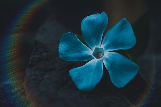 봄철 자연 속에서 로맨틱한 푸른 꽃