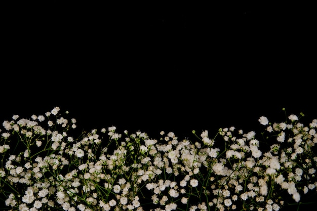 A romantic composition of flowers. white gypsophila flowers on a black background.valentine's day, easter, birthday, happy women's day, mother's day.top view.