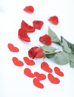 Romantic concept . red rose on white background.