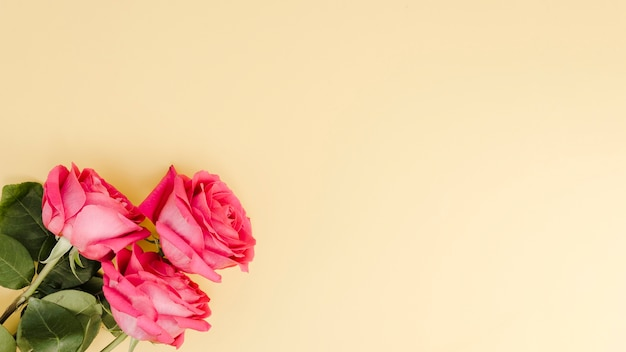 Romantic pink roses with copy space