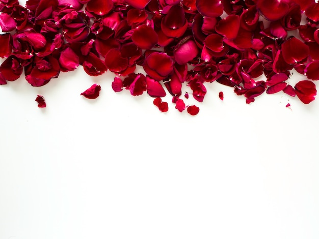 Romantic red rose petals on white background