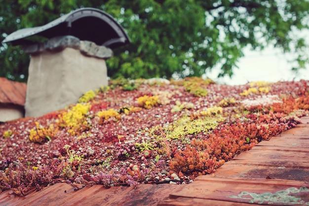 Крыша с очитком. экологичное здание. зеленая экологическая дерновая крыша на деревянном здании. крыша покрыта растительностью в основном очитком sexangulare.