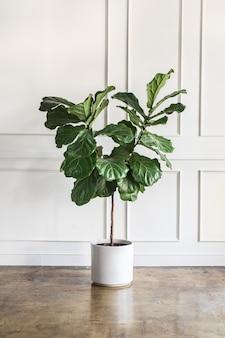 식물로 방 꾸미기