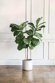 Room decoration with a plant