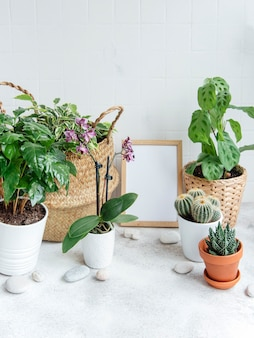 Room filled with a lot of modern plants, home garden with mock up poster frame