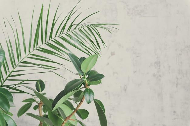 部屋のヤシは灰色の壁の背景に残します。ホームガーデンのモダンな花のコンセプト。