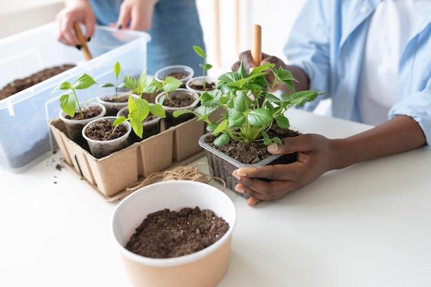 Roommates having a sustainable garden indoors