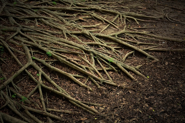 Root tree system in the nature