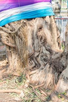 뿌리 나무 줄기