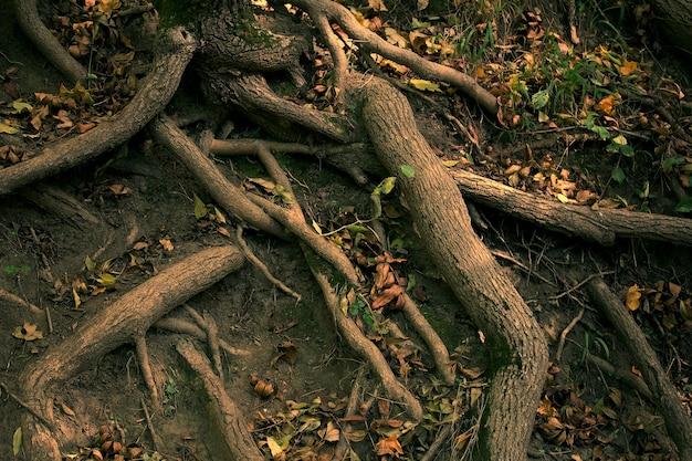 木の根がクローズアップ