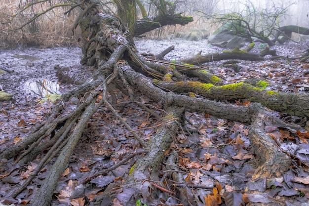 木の根。密林 。霧の風景