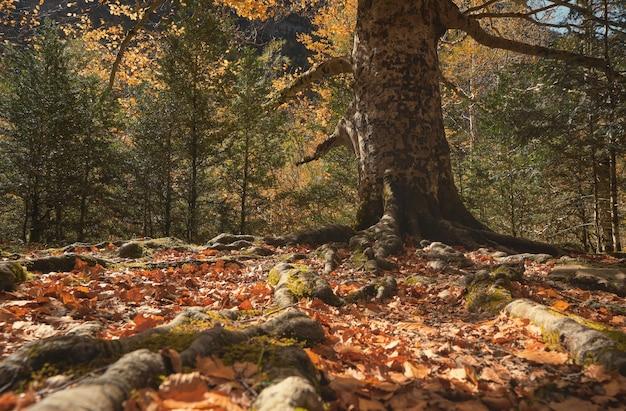 땅에서 튀어 나온 나무의 뿌리