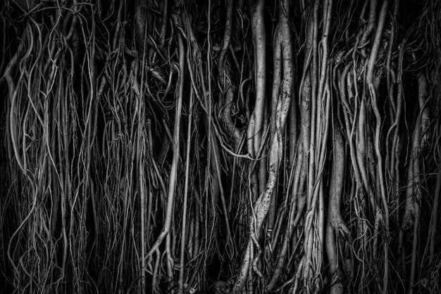The roots and stems of the banyan tree are densely packed, looking cluttered as the surface of the wood, photographing