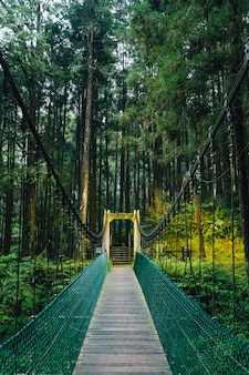 Rope bridge to the forest in alishan national forest recreation area in chiayi county, alishan township, taiwan.