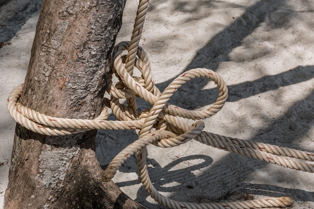 Rope tie from fishing boat with tree closeup