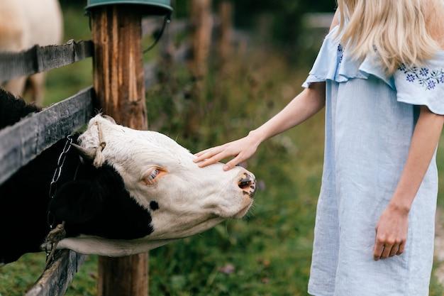 Элегантная девушка в синем романтическом платье трогает корову в деревне.