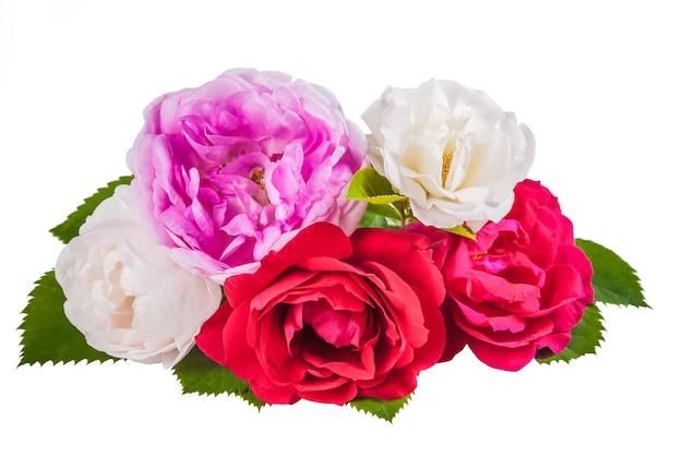 Роза красочные цветы с листьями, изолированные на белом фоне
