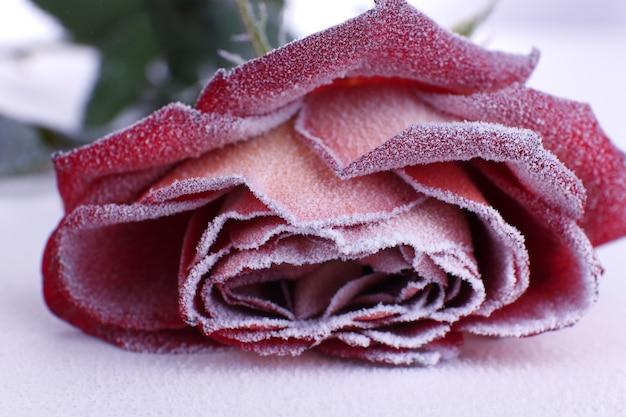 霜で覆われたバラのクローズアップ