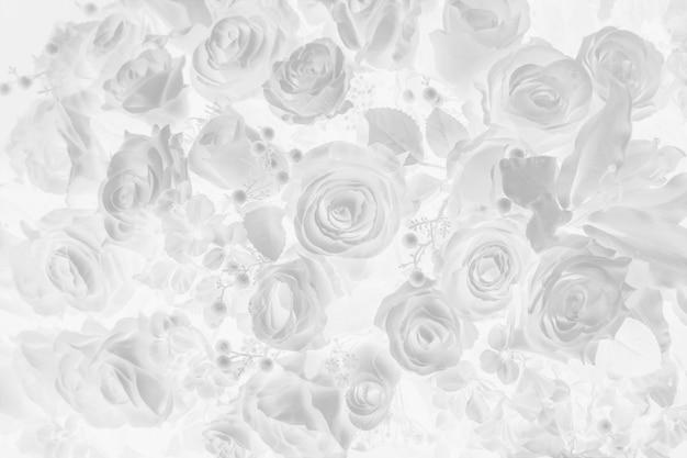 Rose flower in grey color background.