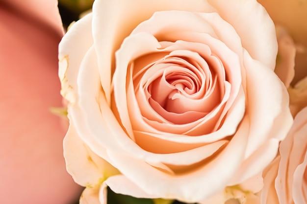 Роза в саду цветочная красота и ботанический фон для свадебного приглашения и приветствия ...