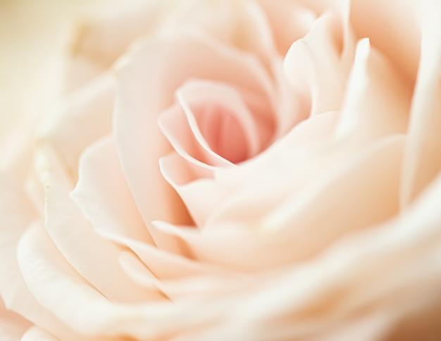 Роза в саду, цветочная красота и ботанический фон для свадебного приглашения и поздравительной открытки, концепция природы и окружающей среды