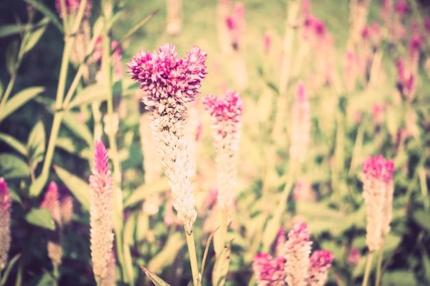 장미 꽃 빈티지 기호 배경