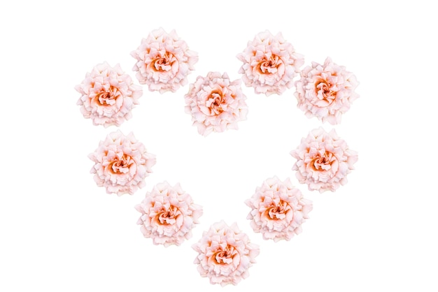 Rose flowers in heart shape isolated on white