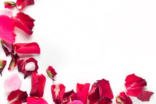 白い背景の上のバラの花赤とピンクの花びら。バレンタインデーの背景。フラットレイ、上面図、コピースペース。