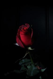 黒の背景に濃い赤のトーンでローズ